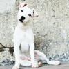 Mylan, chien Parson Russell Terrier