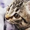 Naia, chat Gouttière