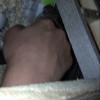 Octavia, rongeur Octodon