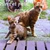 Petit Prince, chat Bengal