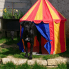 Pixy, chien Cane Corso