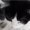 Photo de Prune, chat Gouttière - 419195