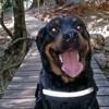 Rig, chien Beauceron