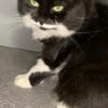 Sana, chat Gouttière