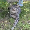 Simba, chat Angora turc