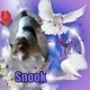 Snook, chien Fox-Terrier