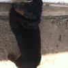 Photo de Dixie, chien Teckel - 388391