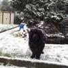 Photo de Jumpy, chien Terre-Neuve - 401732