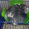 Maman Ses Bébés Et Haya, rongeur Rat