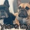 Tyler, chien Bouledogue français