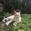 Yokai, chat Gouttière