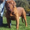 M-Yuvelir Nostalgie De France, chien Dogue de Bordeaux