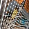 Zouzou, rongeur Hamster