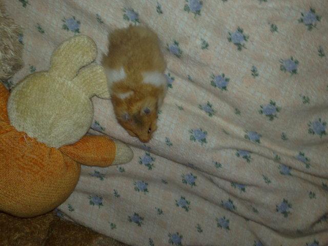 max, Hamster