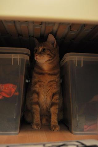 Mademoiselle sous le lit