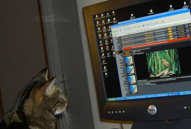 internet pour chat