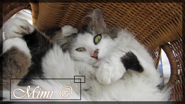 Mimie, chat Gouttière