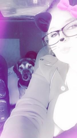 Alkan, chien Beagle