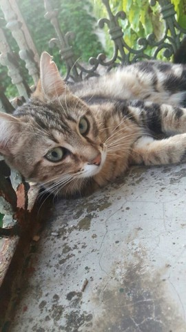 Alma, chaton
