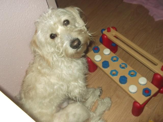 Alvin, chien