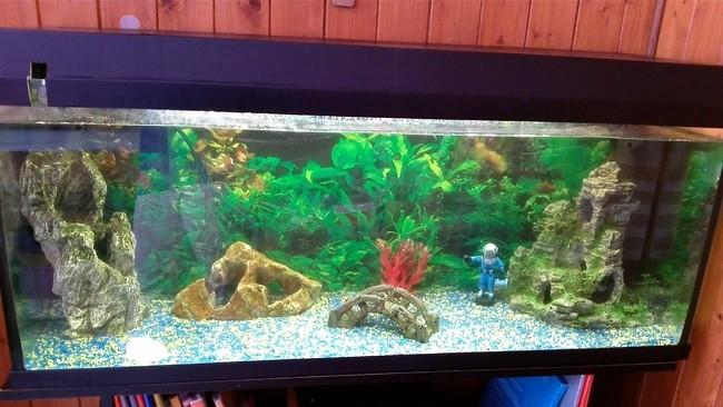 Mon Aquarium , autres