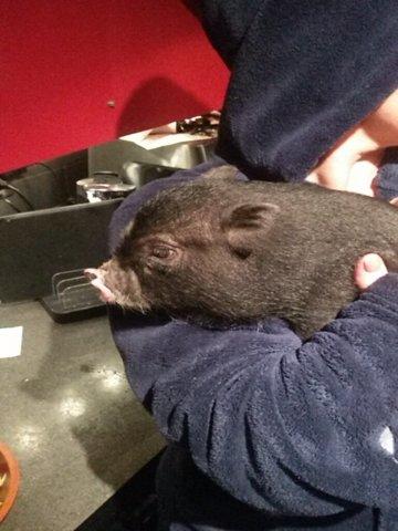 Miss Piggy, autres