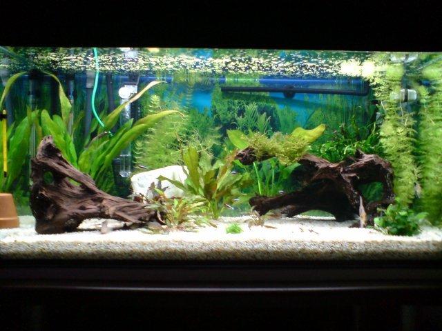 décoration aquarium eau chaude