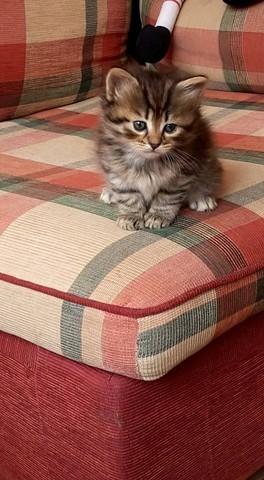Arya, chaton