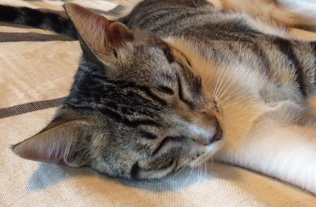Athena, chaton