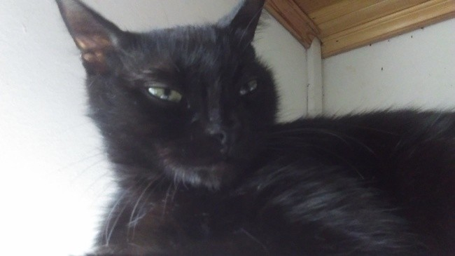 Aubastie, chat Gouttière