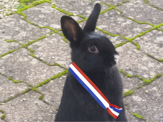 Babouchka, rongeur Lapin