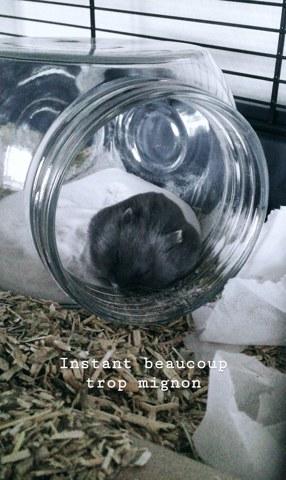 Bat, rongeur Hamster