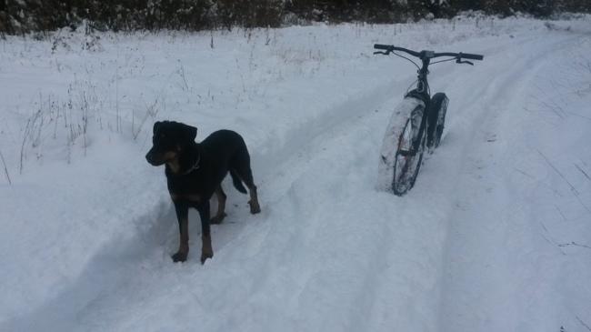 Jazz, chien Beauceron