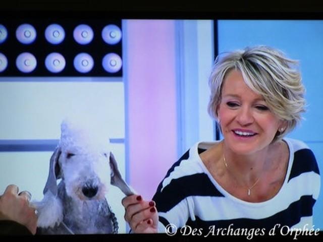 Toolbox Super Trouper Dite Olga, chien Bedlington Terrier