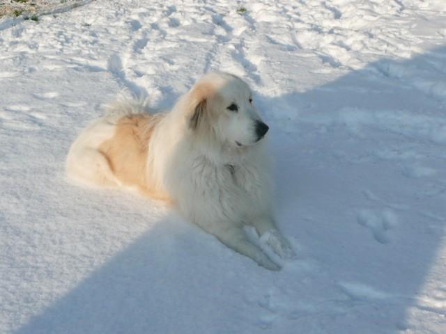Bigorre Décédée 27 Janvier 2012, chien