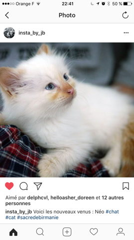 Néo, chaton Birman