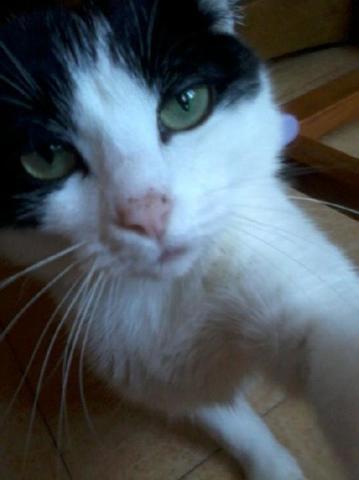 Blanchette, chat Gouttière