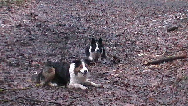 Ghost, chien Border Collie