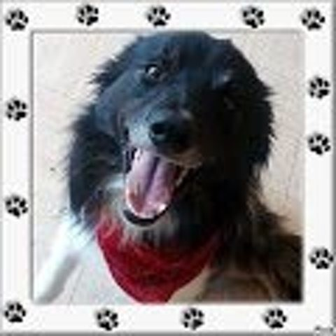 Twister, chien Border Collie