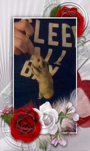 Bounty, rongeur Hamster