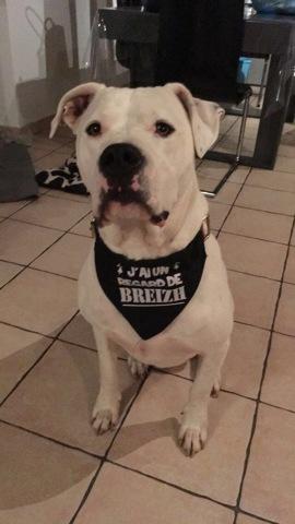 Bounty, chien Dogue argentin