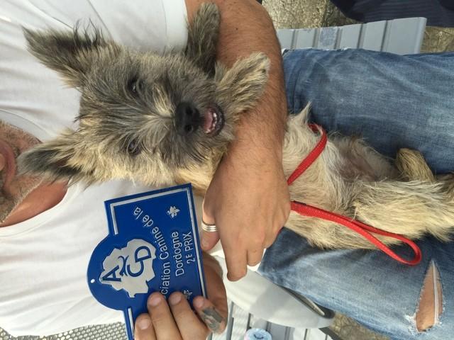 Marley, chien Cairn Terrier