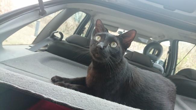 César, chat Gouttière