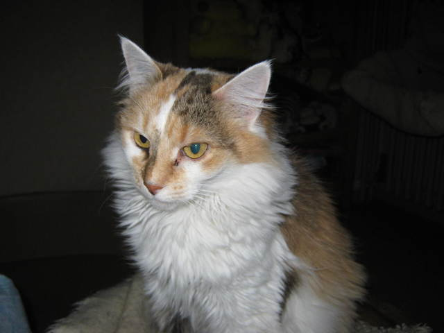 Usibelle, chat