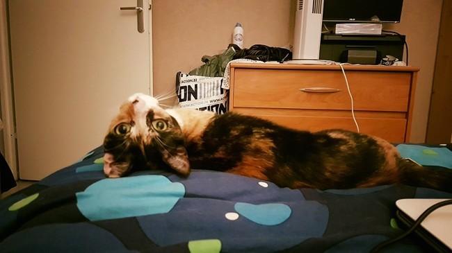 Kaéna, chat