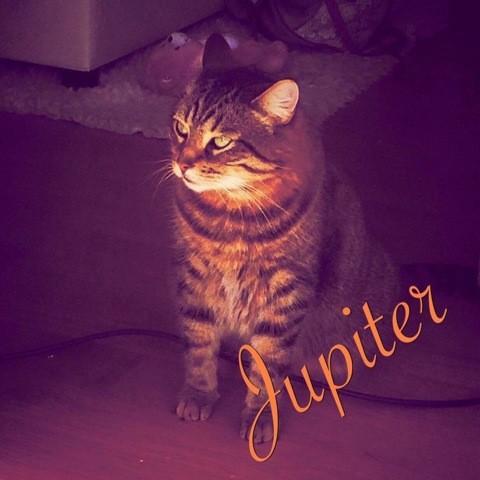 Jupiter, chat