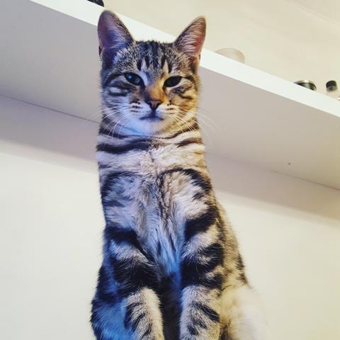 Choupito, chaton