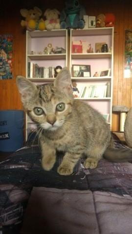 Molly, chaton