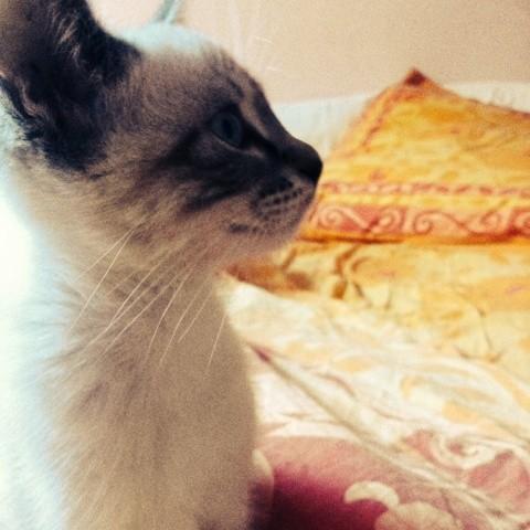 Mango, chaton