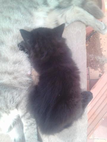 Les Papates Arc-En-Ciel, chaton